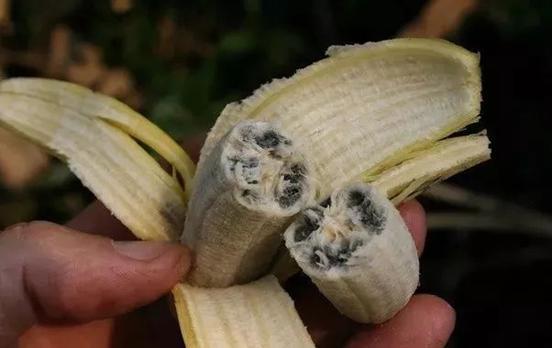 香蕉做小动物图片